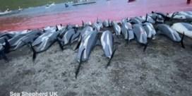 Traditionele dolfijnenjacht Faeröer-eilanden onder vuur na megaslachting