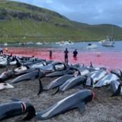 Wat onze reactie op de megaslachting van dolfijnen over onszelf zegt