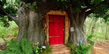 Huisje van Winnie de Pooh komt tot leven in Honderd Bunderdbos
