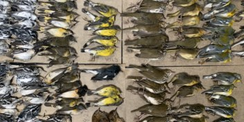 Dierenactivist legt massale vogelsterfte vast rond WTC-torens in NYC