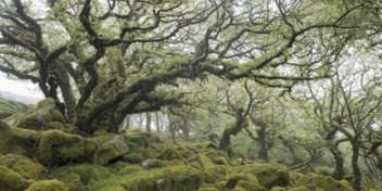 Tot de helft van de boomsoorten bedreigd