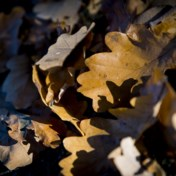 Eerste herfstdag droog en overwegend zonnig
