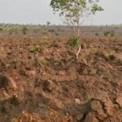 Colruyt ziet in herbebossing deelvan de klimaatoplossing