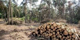 WWF: 'Overstromingen van juli verergerd door intensieve fijnsparplantages in Wallonië'