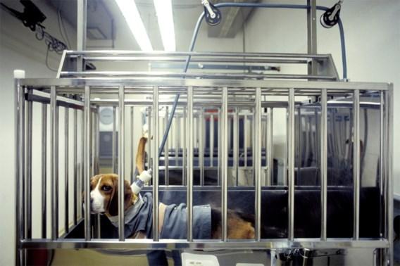 Aantal dierenproeven in Brussel in dalende lijn