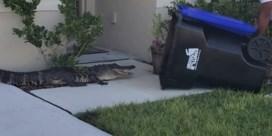 Man ziet alligator in tuin en grijpt op hoogst originele wijze in