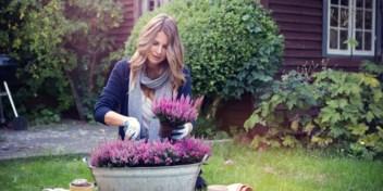 Welke planten en bloemen helpen tegen de herfstblues? Doe de test!