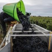 Onder wijnbouwers vind je geen klimaatontkenners