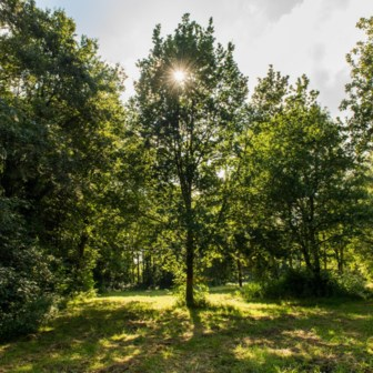 Zijn Gentse bomen meer waard dan Antwerpse?