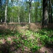 Boskap is geen ontbossing