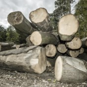 China jaagt op Ardens hout