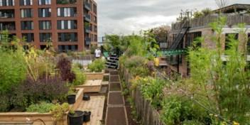 Pakt doet versteend Antwerpen dromen van groene daken