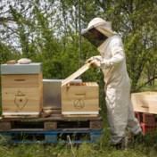 Na de magere druivenoogst, is er nu ook amper honing