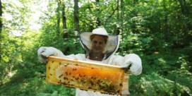 Na de magere wijnoogst, is er nu ook amper honing