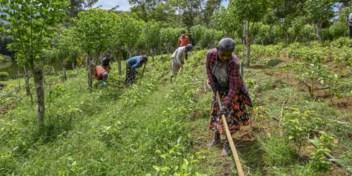 Weg naar '100 procent biolandbouw' gaat niet over rozen in Sri Lanka