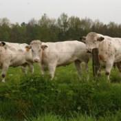Graslanden, de oplossing voor kievit, koe én boer