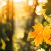 Weerbericht | Het wordt een zonnige zondag
