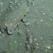 Onderwaterbeelden tonen sterke impact van vulkaanuitbarsting op zeeleven