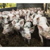 Laat onze varkens en kippen niet stikken